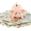 Piggy with money — Stock Photo