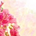 lindo floral abstrato com flores cor de rosa. d de fronteira — Foto Stock #13152835