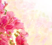 Beautiful abstract floral background with pink flowers. Border d — Stock Photo