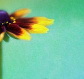 Vintage hintergrund mit schönen blüten — Stockfoto