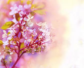 Beautiful spring floral background — Stock Photo