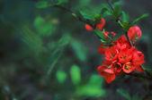Güzel çiçek sınır yeşil zemin üzerine — Stok fotoğraf