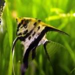 Aquarium fish surrounded by colorful vegetation — Stock Photo