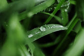 Rain drops on green blades of grass — Stock fotografie