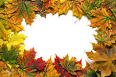 Bright yellow and red autumn leaves in the form of frame — Stock Photo