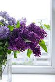 Lila bloem op een venster op een zonnige dag — Stockfoto