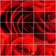 Bright red rose petals — Stock Photo