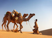 Camel man leads his camels across the Thar desert — Stockfoto