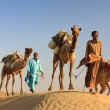 Camel man leads his camels across the Thar desert  — Stock Photo