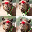 Nice smile elegant camel. — Stock Photo #23531647