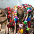 Decorated camel at the Pushkar fair. Rajasthan, India, Asia — Stock Photo