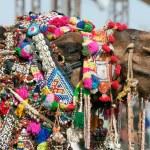 Decorated camel at the Pushkar fair. Rajasthan, India, Asia — Stock Photo