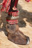 Dekorerad kamel fot — Stockfoto