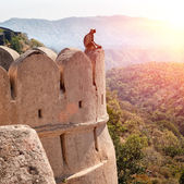Kumbhalgarh fort, Rajasthan, India — Stockfoto