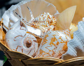 Sea shells in a basket — Stock Photo