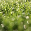 Fresh morning dew on spring grass, natural background — Stock Photo #14180100