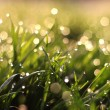 Fresh morning dew on spring grass, natural background — Stock Photo