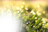 Fresh morning dew on spring grass, natural background with white space for your text — Stock Photo