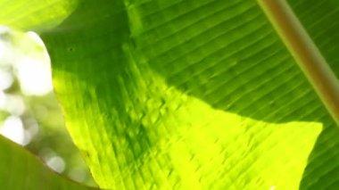 绿叶 — 图库视频影像