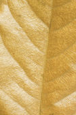 Folha seca — Foto Stock