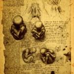 Постер, плакат: Anatomy
