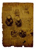 解剖学 — ストック写真