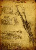 Anatomie — Photo