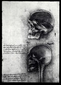 Anatomia — Foto Stock