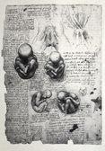 Anatomy — Zdjęcie stockowe
