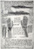 Anatomie — Stockfoto