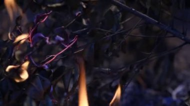 Fire burning — Stock Video