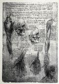 Anatomía — Foto de Stock