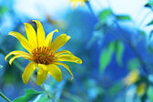 Flower in nature — Stock Photo