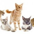 Group of cats — Stock Photo #12599421