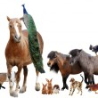 Foto Stock: Farm animals