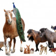 Stock Photo: Farm animals