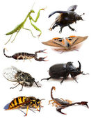 Insects and scorpions — Stock Photo