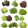 Varieties of salads — Stock Photo #15757189
