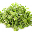 Watercress — Stock Photo #15757683