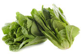 Romaine lettuces — Stock Photo