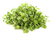 Watercress — Stock Photo