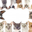 Group of cats - Stock Photo