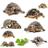 Group of Tortoises — Stock Photo