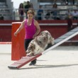 Border collie in agility — Stock Photo #25246123