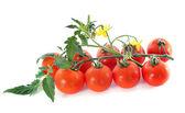 Cheery tomatoes — Stock Photo