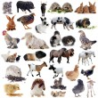 Farm animals — Stock Photo #31060813