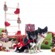 Christmas chihuahuas — Stock Photo #33492729