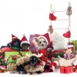 Christmas chihuahuas — Stock Photo #33492759