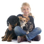 Child and dogs — Stock Photo
