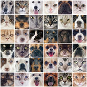 Group of dogs and cats — Stock Photo